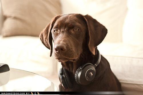 black disapproval labrador morrissey Music musical taste puppy Sad taste the smiths themed goggie week - 4194142976
