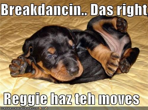 awesome breakdancing dancing Hall of Fame moves puppy rottweiler showing off - 4194233600