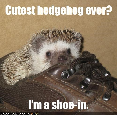 caption,captioned,cute,cutest thing ever,hedgehog,pun,puns,shoe