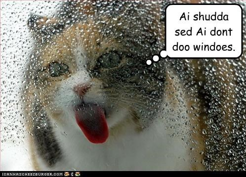 accommodations,caption,captioned,cat,do,dont,regret,said,should have,windows,working