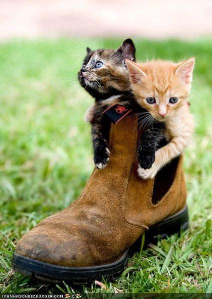 boots,cyoot kitteh of teh day,kitten,shoes,two cats
