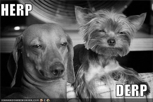 cat critters derp dogs herp and derp pets twins - 4194756352