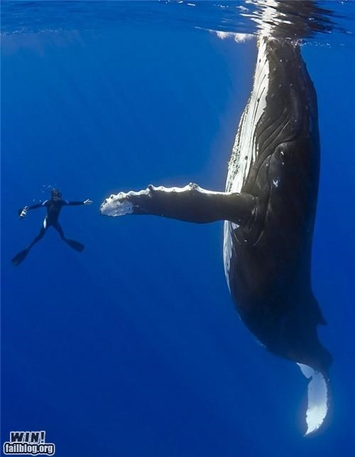 animals high five scuba underwater - 4195025152