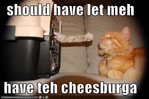 Cheezburger Image 4195091200