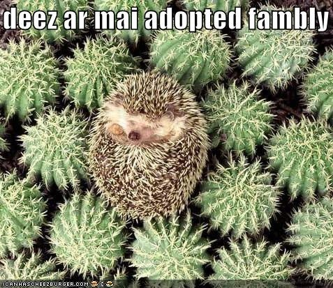 adopted cacti cactuses caption captioned cute family hedgehog mine these