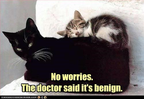 benign caption captioned cat Cats doctor kitten no worries prognosis tumor