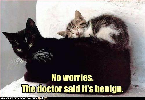 caption captioned cat Cats doctor kitten no worries prognosis - 4195894528
