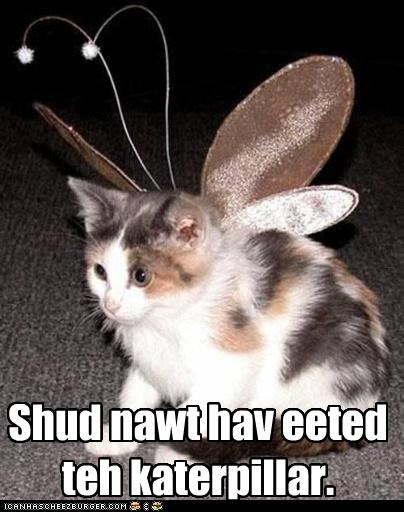 antennae,butterfly,caption,captioned,cat,caterpillar,costume,dressed up,eaten,eating,kitten,regret,wings