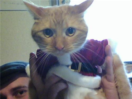 cat,costume,funny look,santa claws
