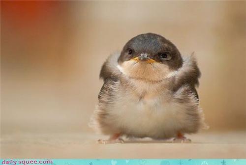 angry bird serious - 4196156672
