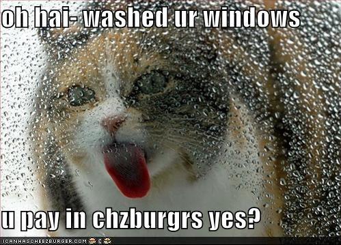 Cheezburger Image 4196349184