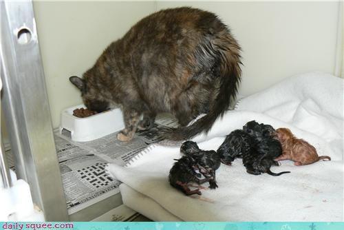 baby kitten mama pre-alpha - 4196450048