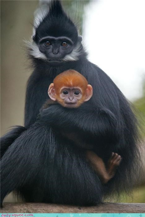 baby cute mom monkey - 4196491776