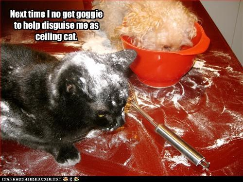 Next time I no get goggie to help disguise me as ceiling cat.