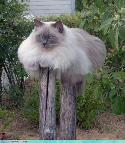 cat floof Fluffy Friday stilts - 4196536576