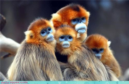 blue monkey,colors,monkey,orange,pretty