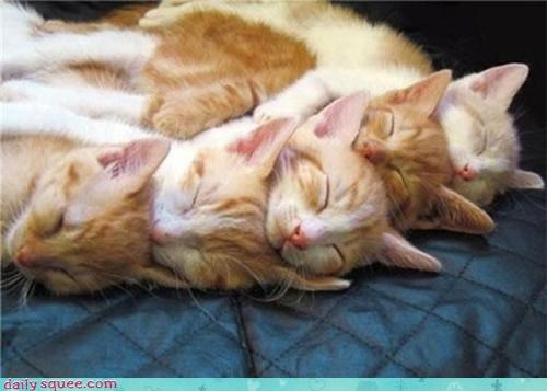 cat cute kitten pile - 4196591872