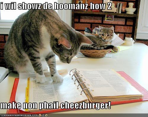 Cheezburger Image 4196627456