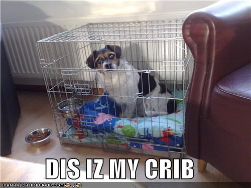 DIS IZ MY CRIB