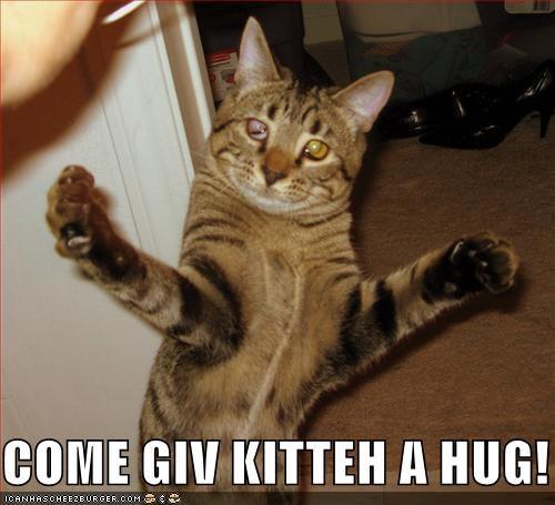 COME GIV KITTEH A HUG!