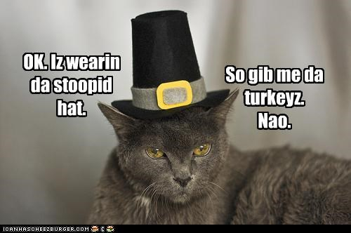 angry annoyed caption captioned food hat holidays noms pilgrim thanksgiving Turkey - 4196800256