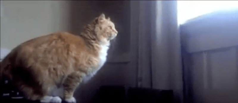 a funny list of cat gifs for friday