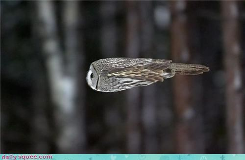 acting like animals awesome fast fire flight flying mid-flight missiles Owl ramming speed speed - 4197376768