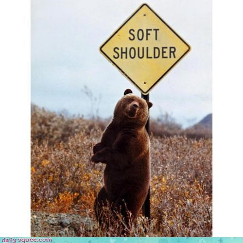 acting like animals,bear,funny,literalism,road sign,rubbing,shoulder,sign,soft