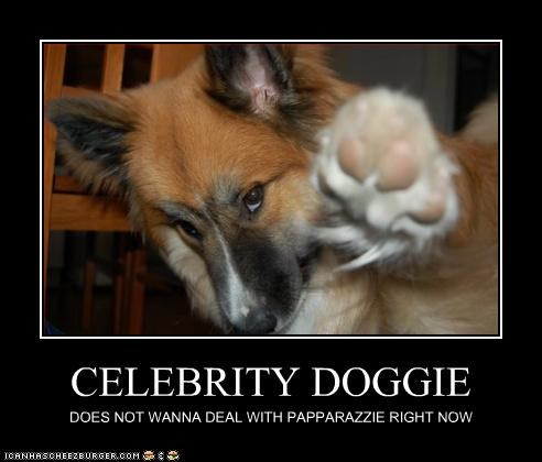 CELEBRITY DOGGIE DOES NOT WANNA DEAL WITH PAPPARAZZIE RIGHT NOW
