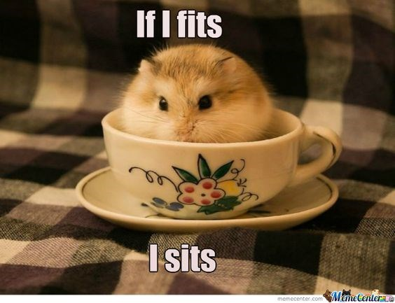 a funny list of hamster memes