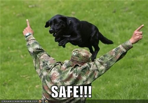 animals dogs funny lolz military soldier - 4198283264