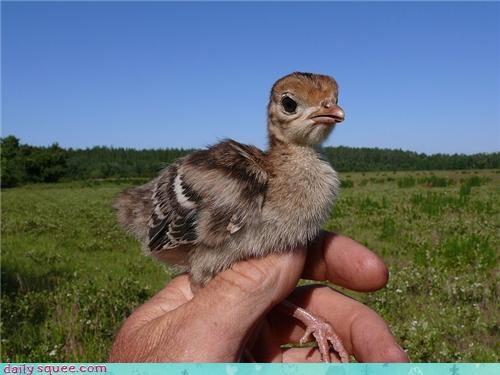baby bird Turkey - 4198695168