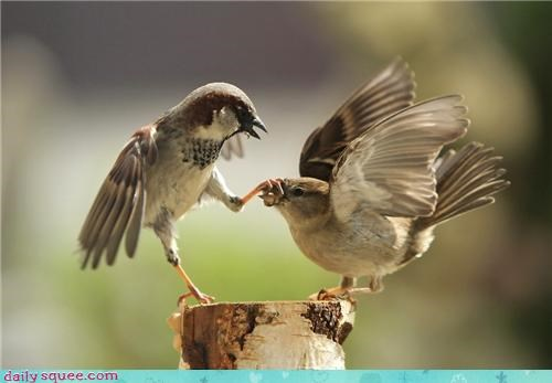 bird funny shut up tweet - 4199021824