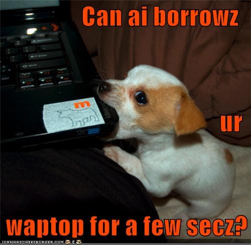 asking begging borrow borrowing jack russell terrier laptop please puppy question - 4199046912