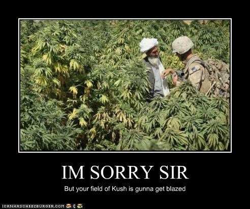 IM SORRY SIR But your field of Kush is gunna get blazed