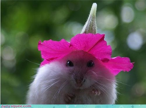 cute,hamster,Harry Potter,sorting hat