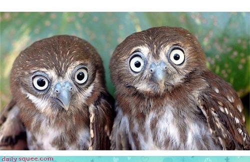 cute face funny Owl - 4199376896
