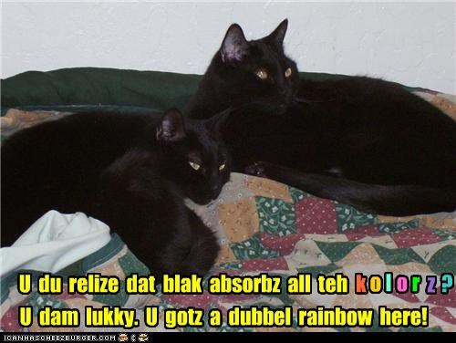 black cats,caption,captioned,cat,Cats,colors,double rainbow,justification,meme,question,rainbow,realization