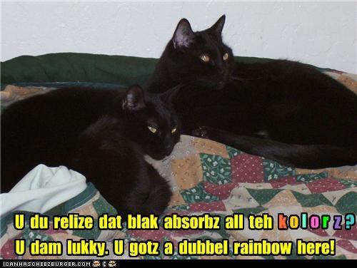 black cats caption captioned cat Cats colors double rainbow justification meme question rainbow realization - 4199585792