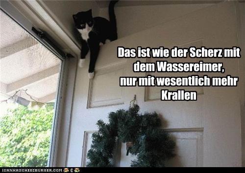 Cheezburger Image 4199591680