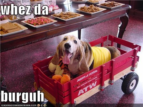 Cheezburger Image 4199812608