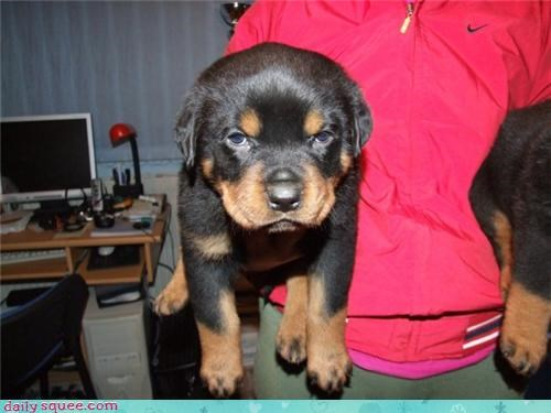 cute dogs puppy - 4200764672