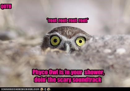 *reet reet reet reet* Phyco Owl is in your shower, doin' the scary soundtrack QOTU