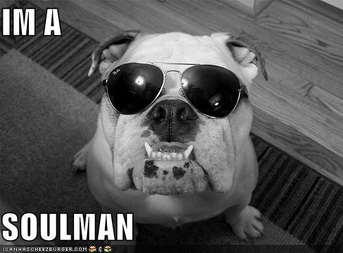 blues brothers,bulldog,glasses,soul,soul man,soulman,sunglasses,swagger,teeth