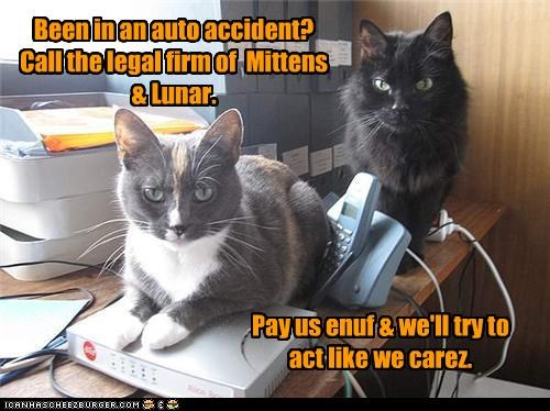 advertisement auto accident caption captioned caring cat Cats commercial law firm Lawyers legal money pretending - 4201131520