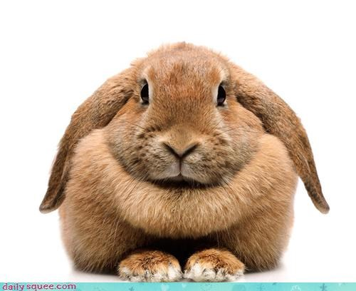 bunny,chin,chubby,happy bunday,Pillow,rabbit