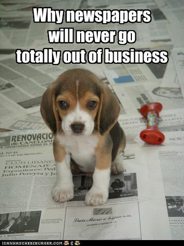 Cheezburger Image 4201786880