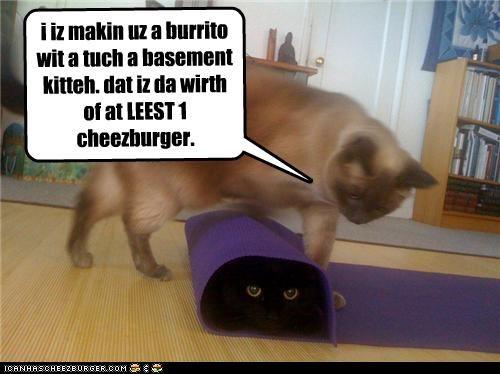 Cheezburger Image 4201834752
