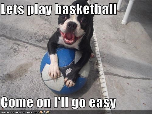 ball basketball boston terrier i win play smiling sports - 4202031872