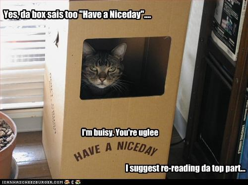 "Yes, da box sais too ""Have a Niceday"".... I'm buisy. You're uglee I suggest re-reading da top part..."